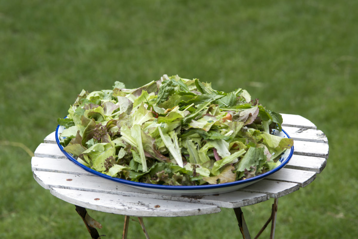 fresh and delicous garden salad on a table